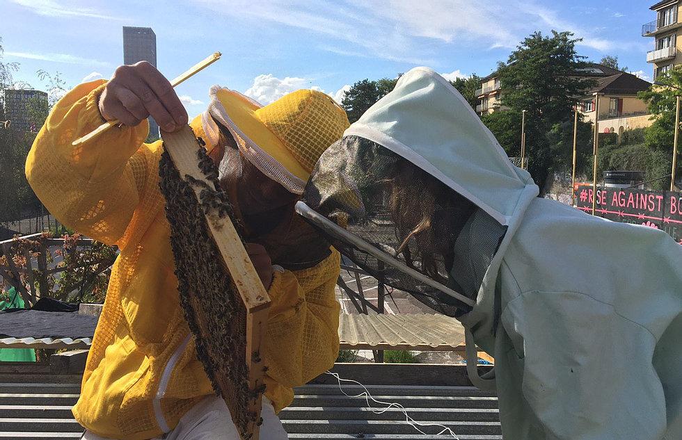 Young Beekepers Wipkingen (Imkern für Kinder zwischen 9-12)