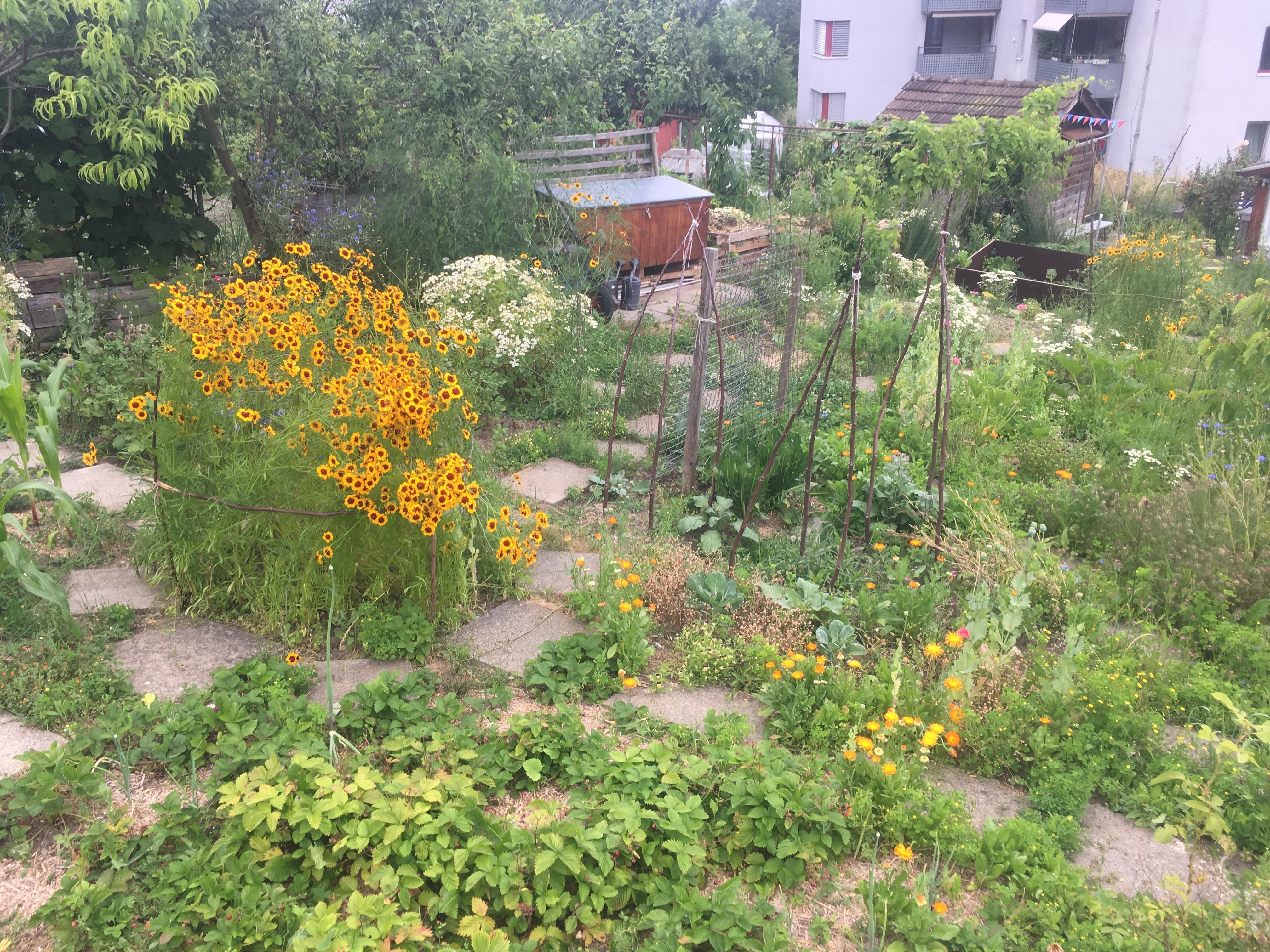 Ein Quartiergarten für Wiedikon