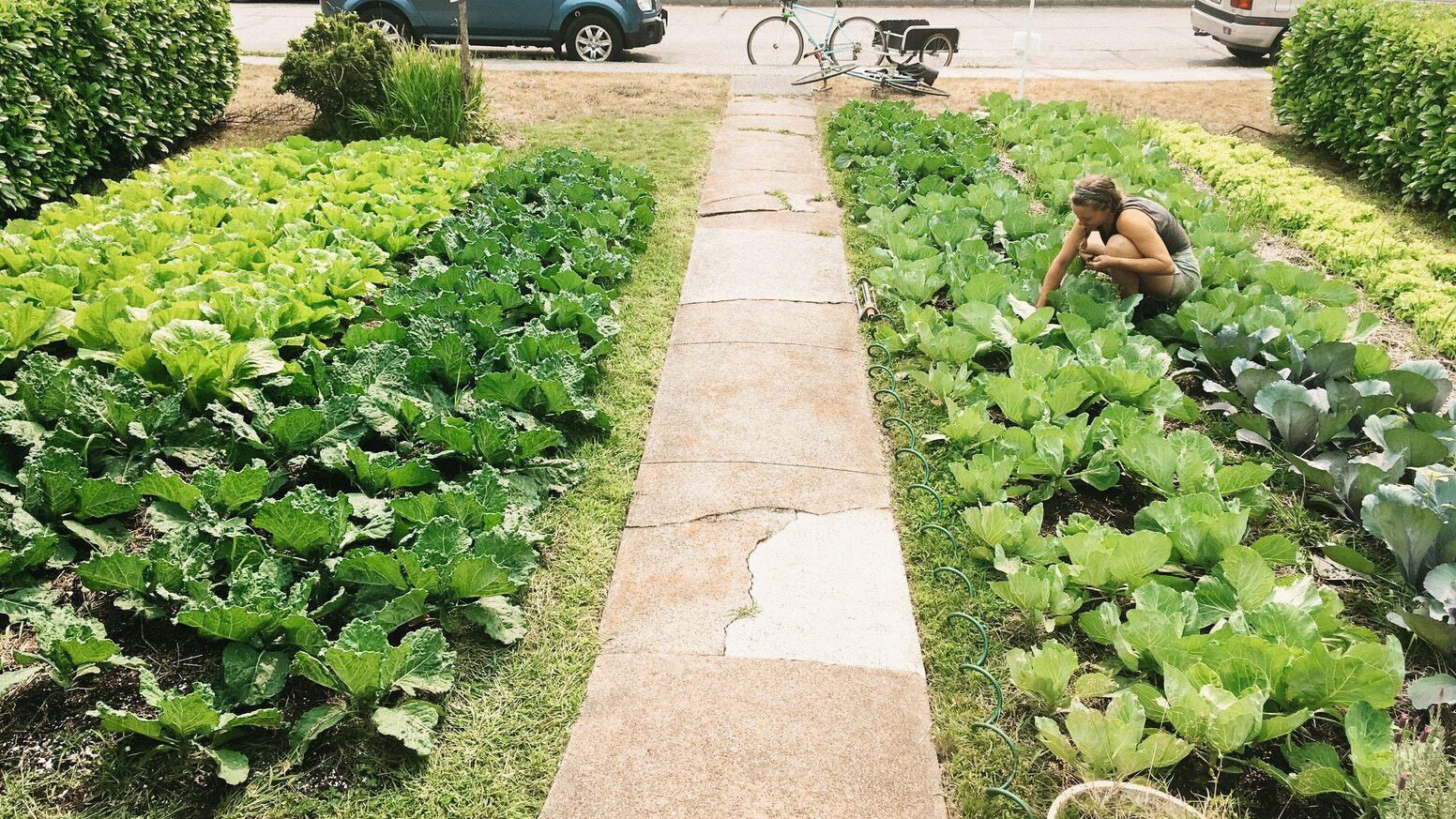 Spazier-Workshops für Nachbarschafts-Farming bzw. Quartier-Solawis, die auf mehreren in der Nachbarschaft verteilten Flächen Lebensmittel anbauen