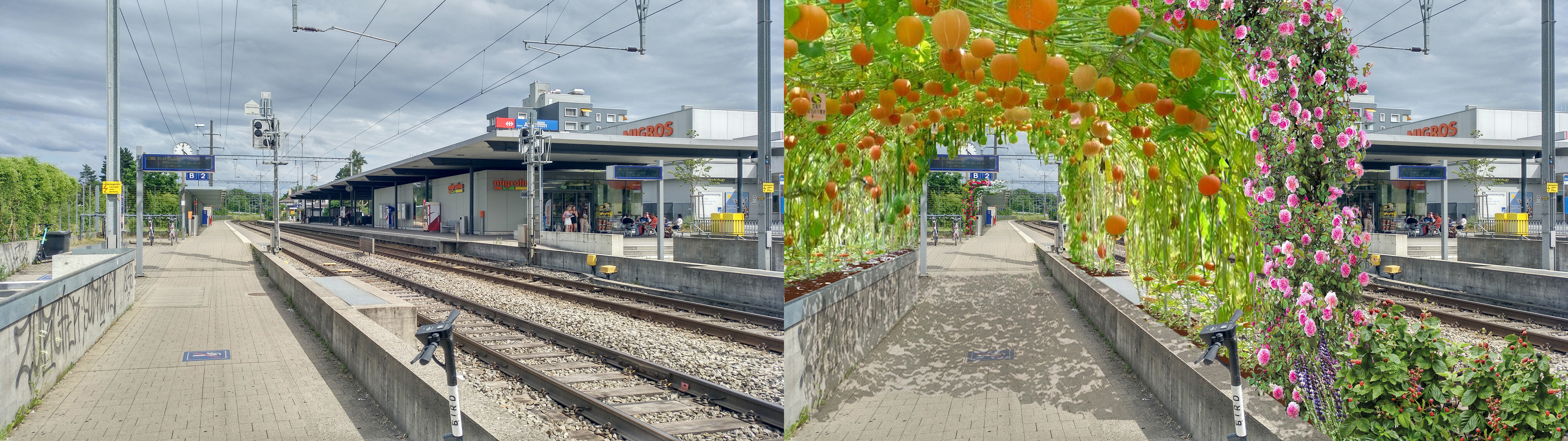 Fussweg-Gärten – mehr Schatten im Sommer für Trottoirs und (Vor-)Plätze etc., mit weniger Lärm, weniger Feinstaub dafür mehr Kräuter- und Blütenduft?