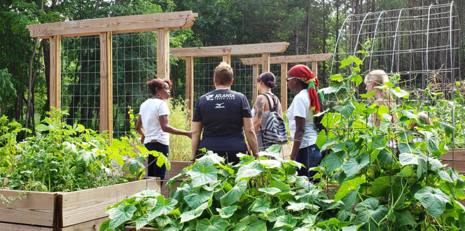 Nachbarschafts-Netzwerk naturnaher Nutzgärten – sich austauschen, teilen der Ernte und unterstützen neuer Nutzgärten mit hoher (Agro-)Biodiversität