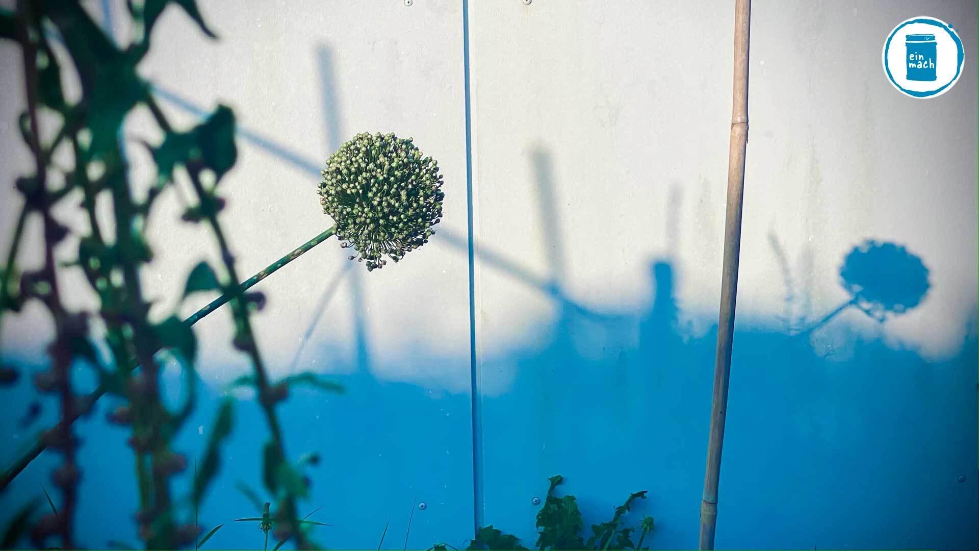 Garten Plus - Powered by Plants