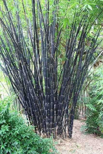 Bambuswäldchen pflanzen – die gleichzeitig als schattige Spielplätze u.v.m. dienen und als Baumaterial für Rankhilfen, Aussenraumstrukturen u.v.m.