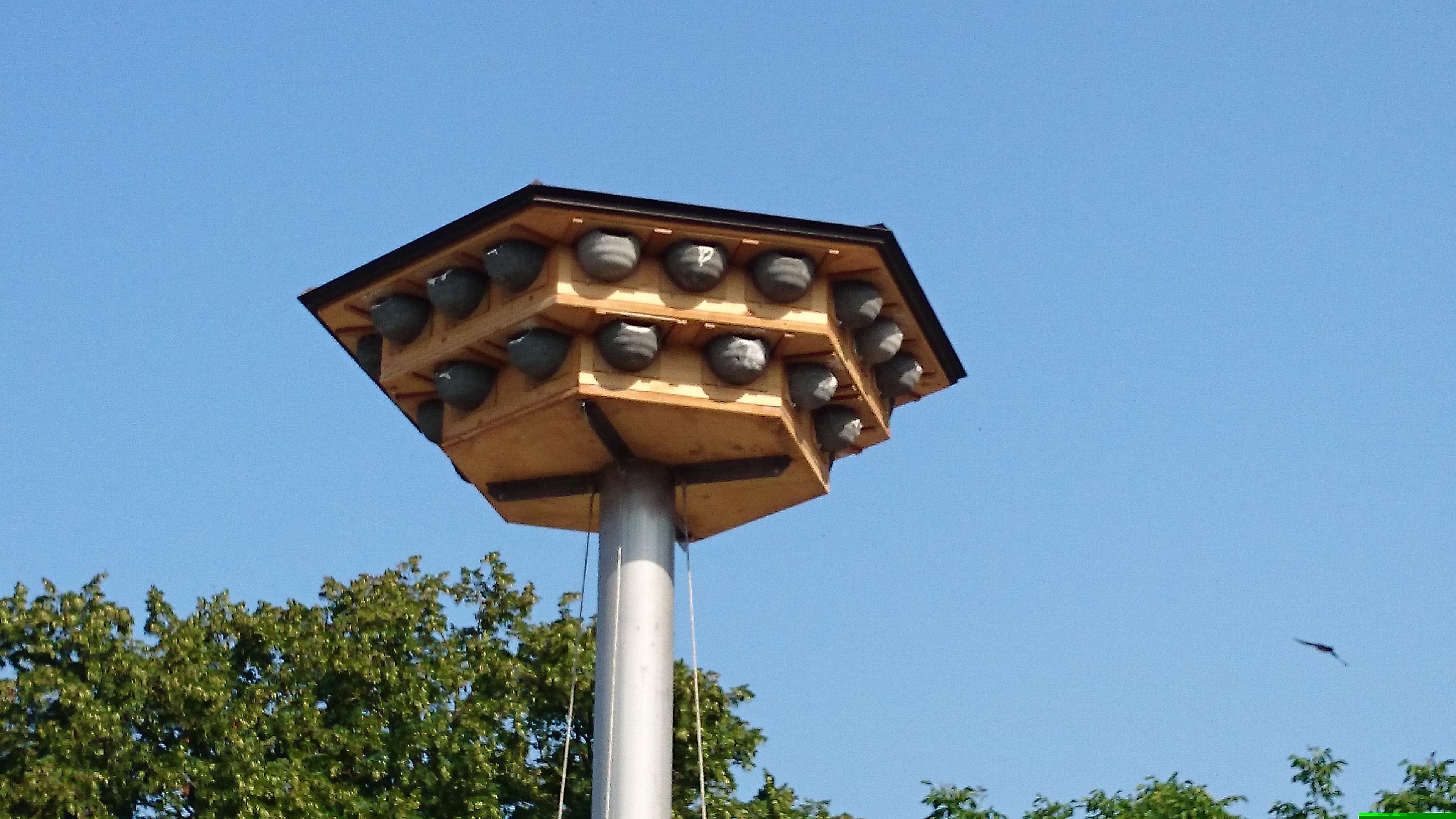 Mehlschwalbenhaus für Zürich-Höngg