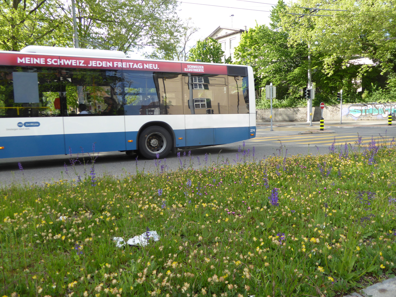 Grün statt Grau an der Kreuzung Limmattal-/Winzerstrasse